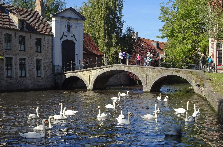 Belgium Swans in Bruges