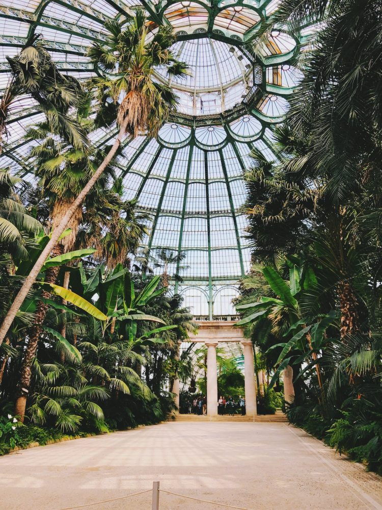 Private Tours Brussels - Royal Greenhouses of Laeken by alex-vasey